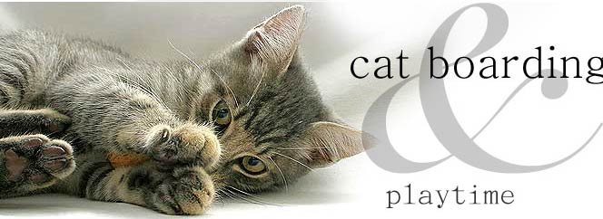 Best Cattery in Sydney