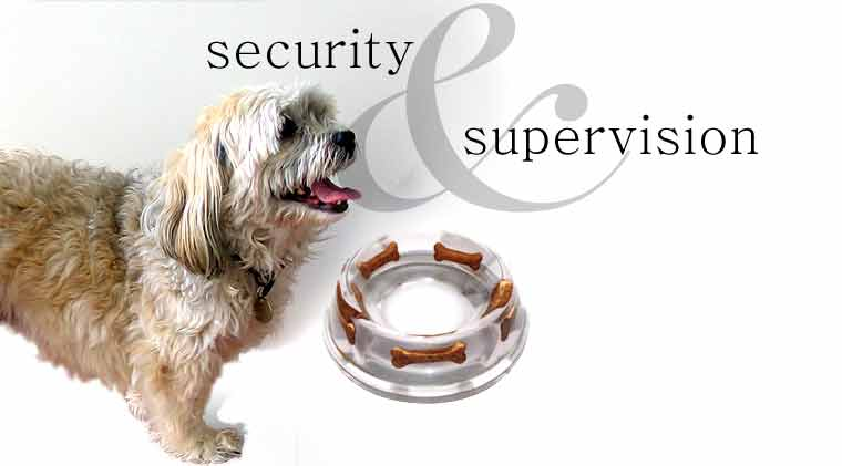 security and supervision for your pets