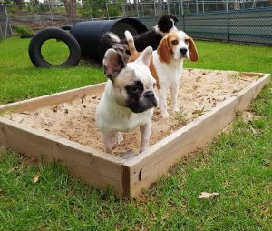 Sensory Garden at The Canine Lodge